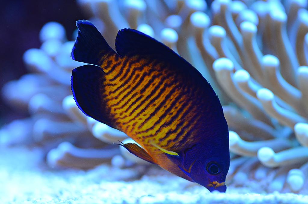 Coral Beauty.jpg