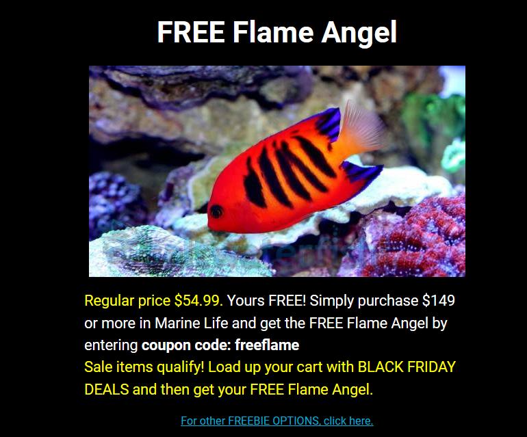 flame-angel-saltwaterfish.png