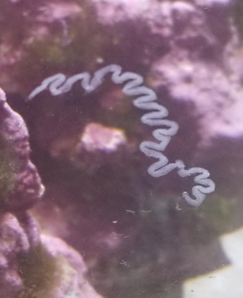 glass algea.jpg