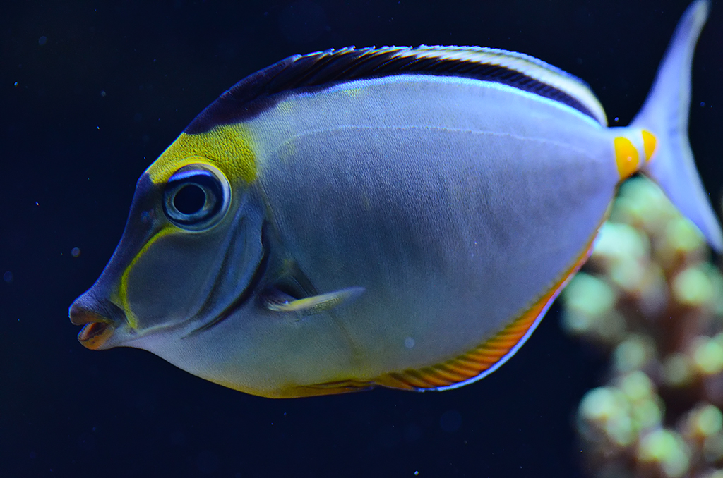 Centerpeice of your tank? | Saltwaterfish Forum