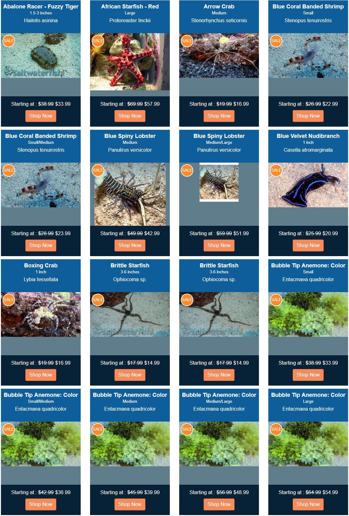 on-sale-invertebrates-opt.jpg