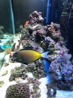 reef tank end view.jpg
