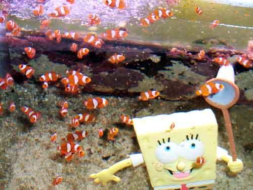 spongeclown.jpg