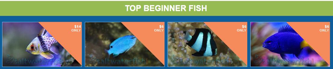 top-beginner-fish.png