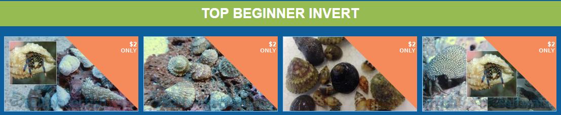 top-beginner-invert.png