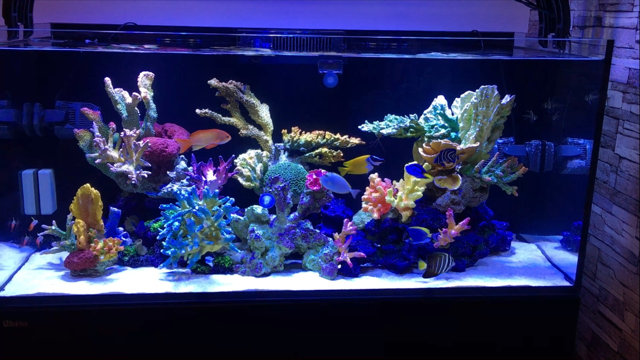 Marine fish compatibility in fish only tank for Fish only saltwater tank