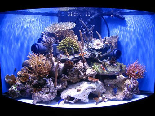 Calling all 55 reef tanks saltwaterfish forum for 55 gallon corner fish tank