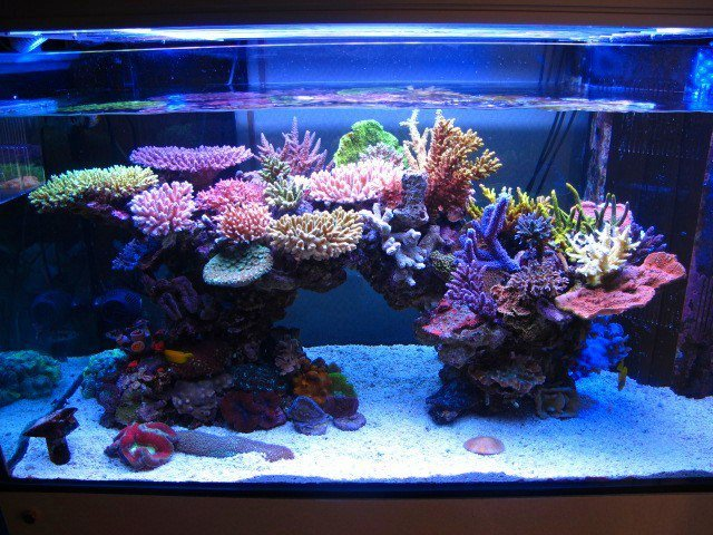 Is it possible to have a reef tank look like this? What do ...