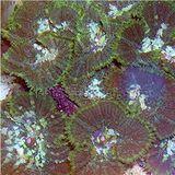 Mushroom Coral - Crumb