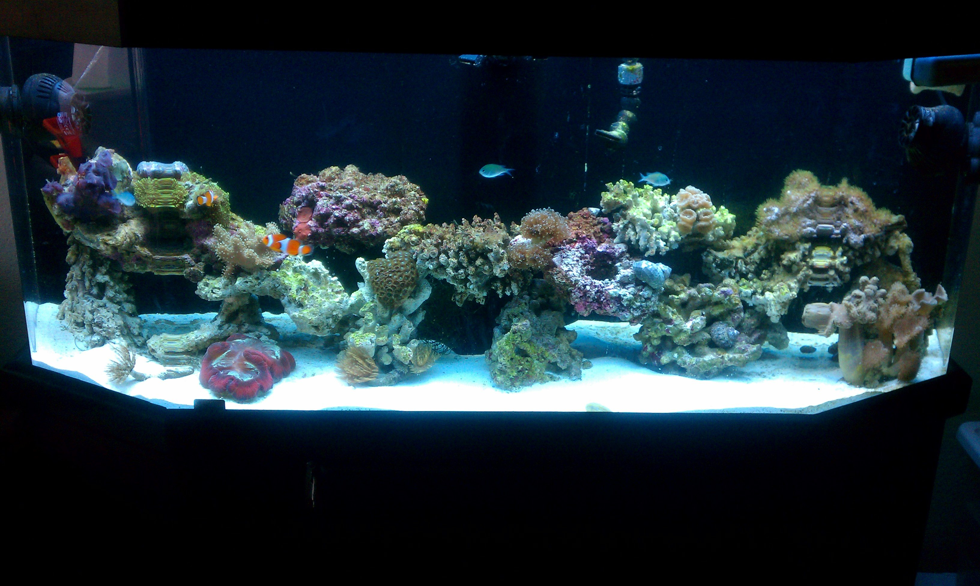 Saltwater fish 55 gallon aquarium 55 gallon saltwater for 55 gallon corner fish tank