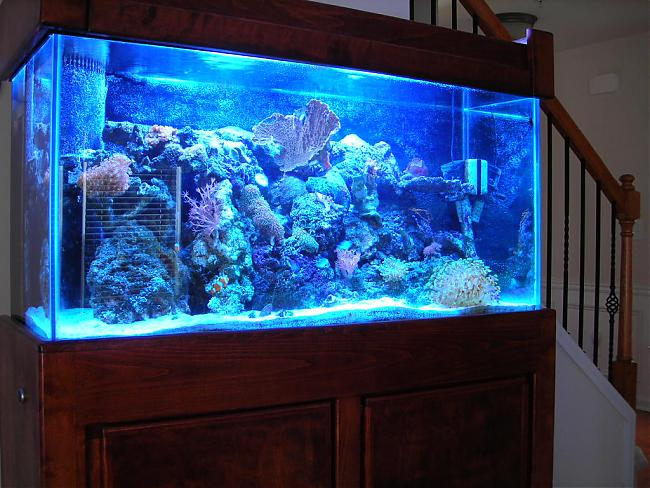 90 gallon saltwater fish tank my 90 gallon reef tank
