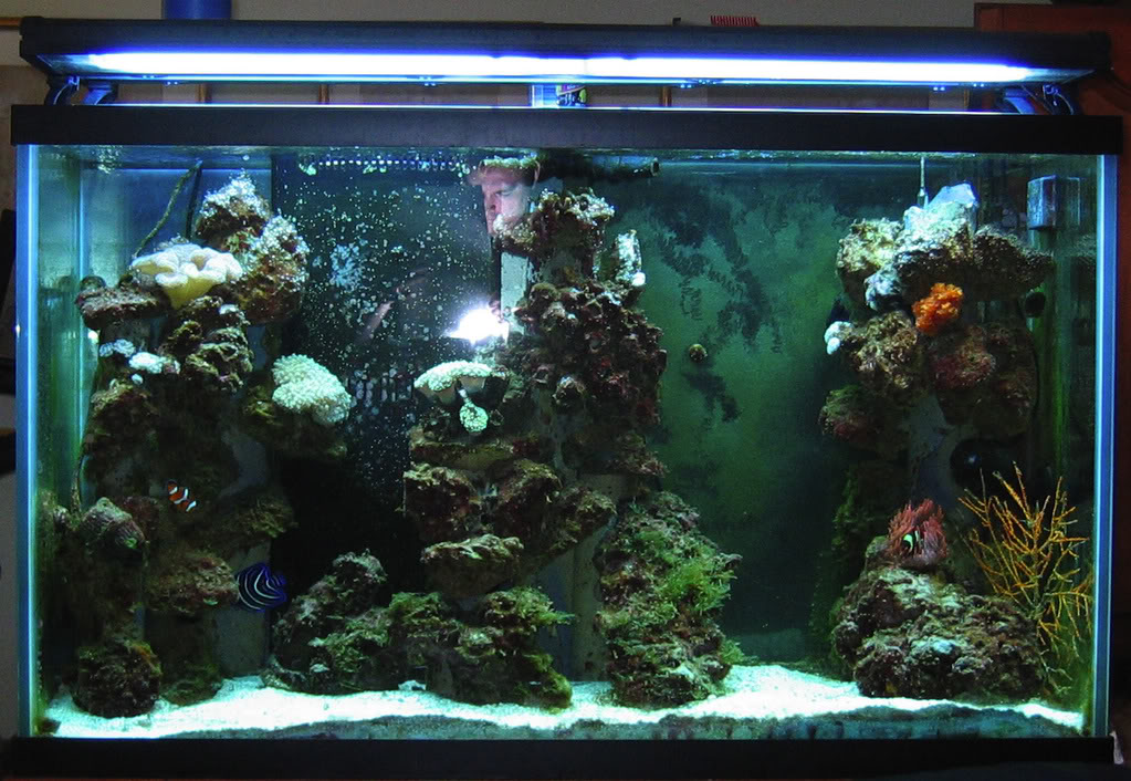 Pvc and super glue saltwaterfish forum for Fish tank glue