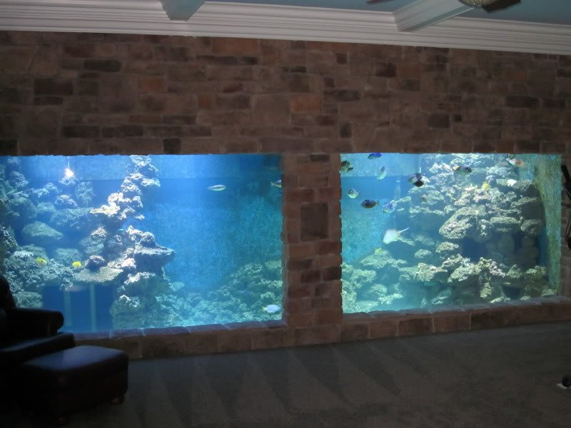 10 000 gallon saltwater fish tank 20 000 gal tank for 1000 gallon fish tank for sale
