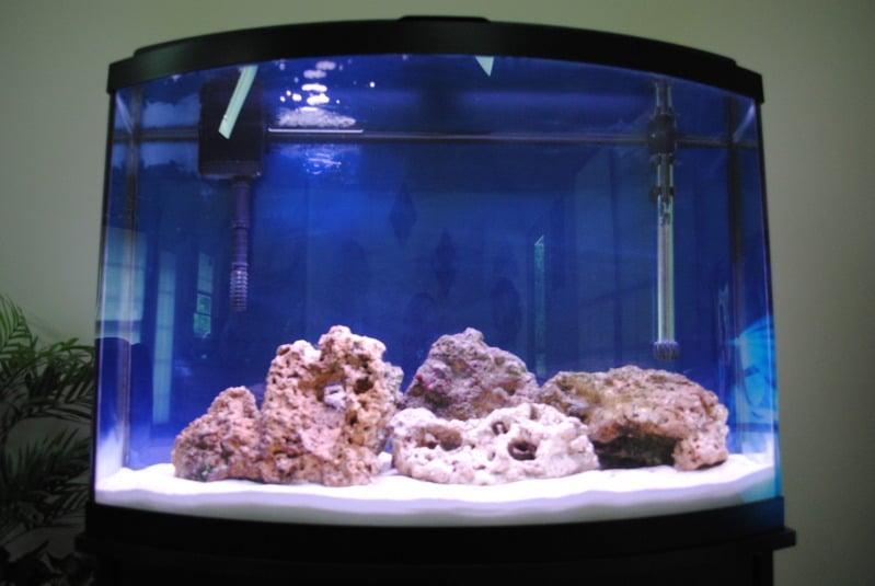 First FOWLR tank, all help needed Saltwaterfish Forum