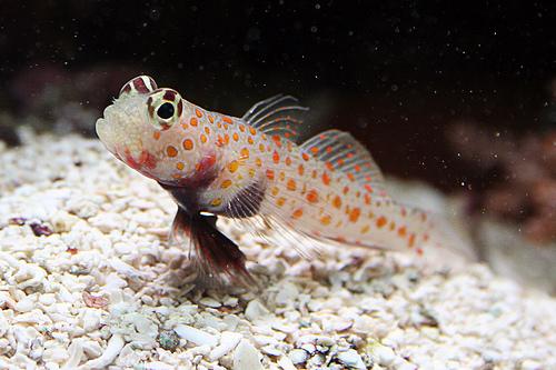 Beginner saltwater saltwaterfish forum for Beginner saltwater fish