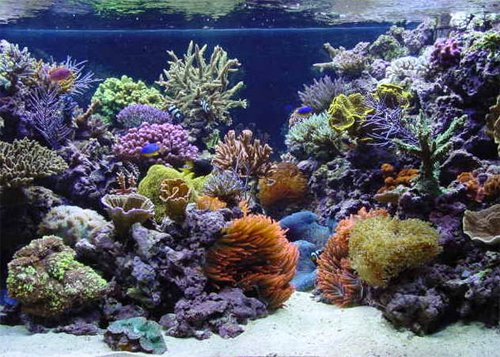 Aquscaping tips ideas saltwaterfish forum for Sc saltwater fish