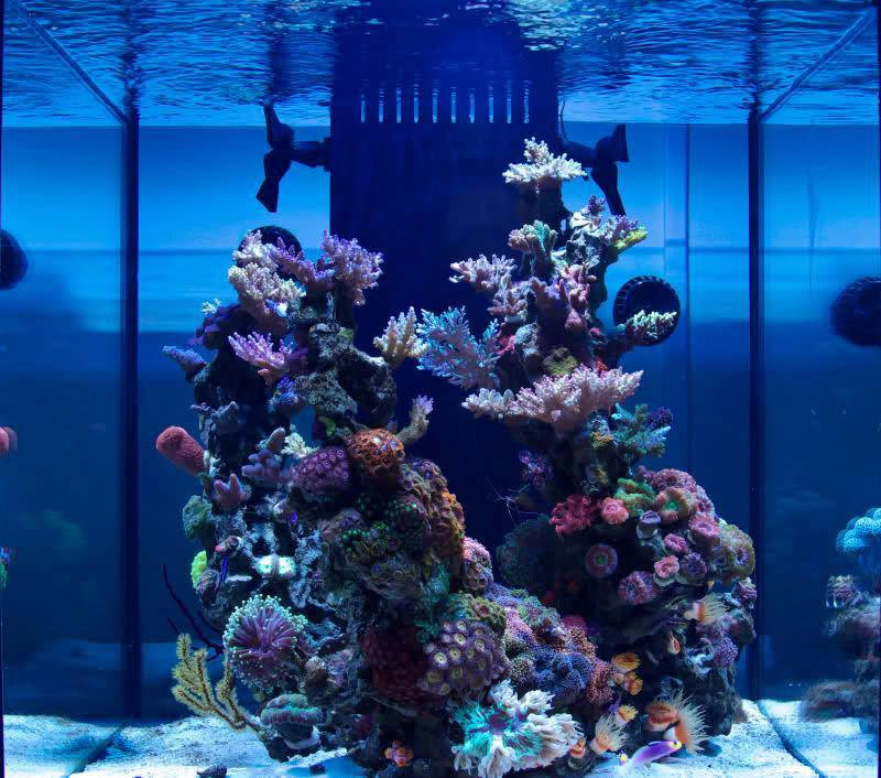 Is It Possible To Have A Reef Tank Look Like This What Do