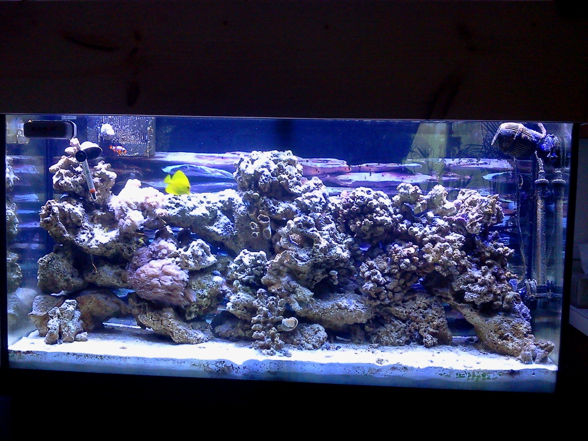 Saltwater fish 60 gallon large marine aquarium 60 gallon for 60 gallon fish tank