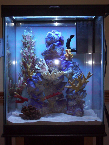 novahobbies 39 37g seahorse tank journal saltwaterfish forum