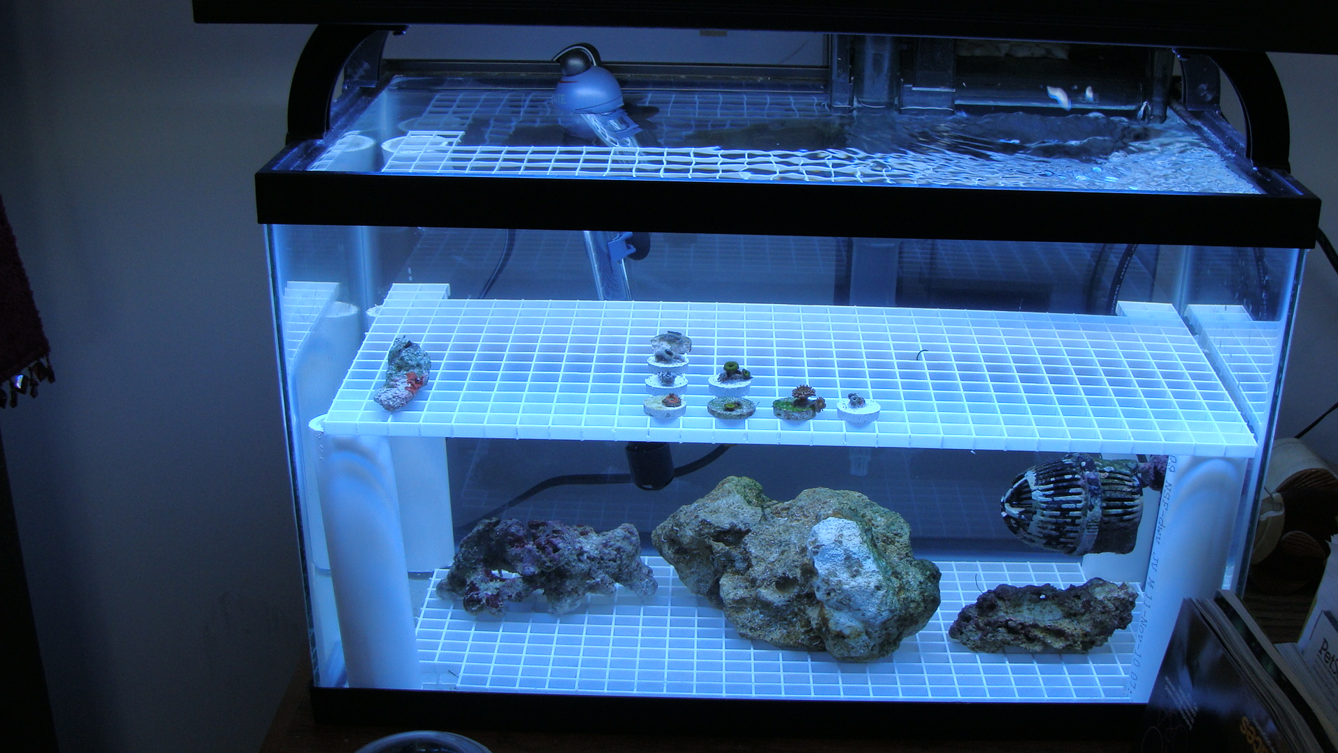 10 G Reef Start Up Looking For Input Saltwaterfish Com