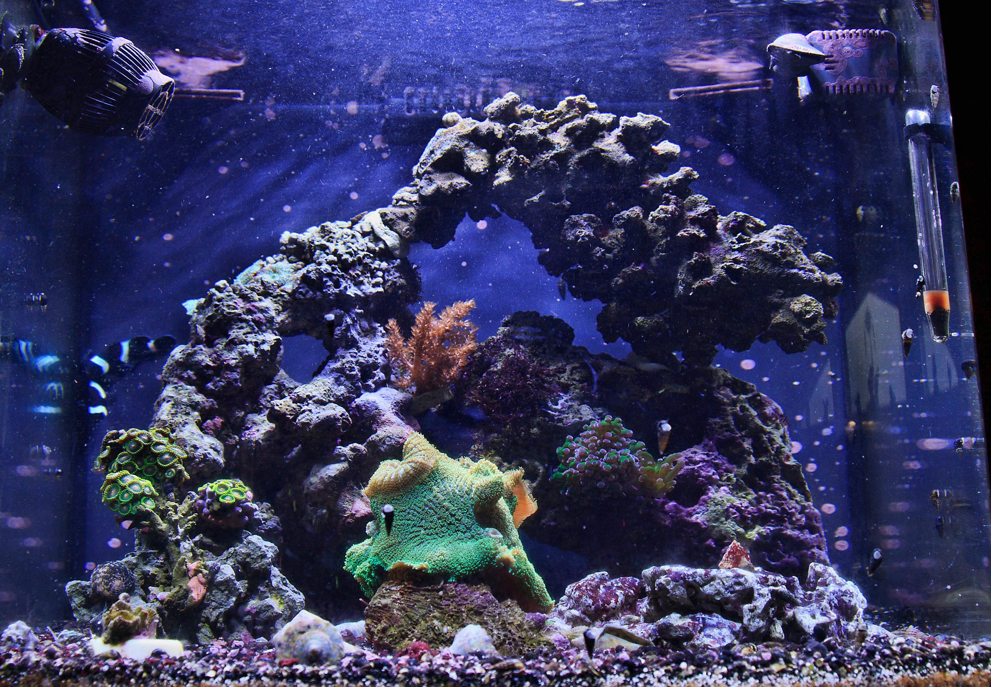 Aquascaping Live Rock Saltwaterfish Com Forums For Fish Lovers