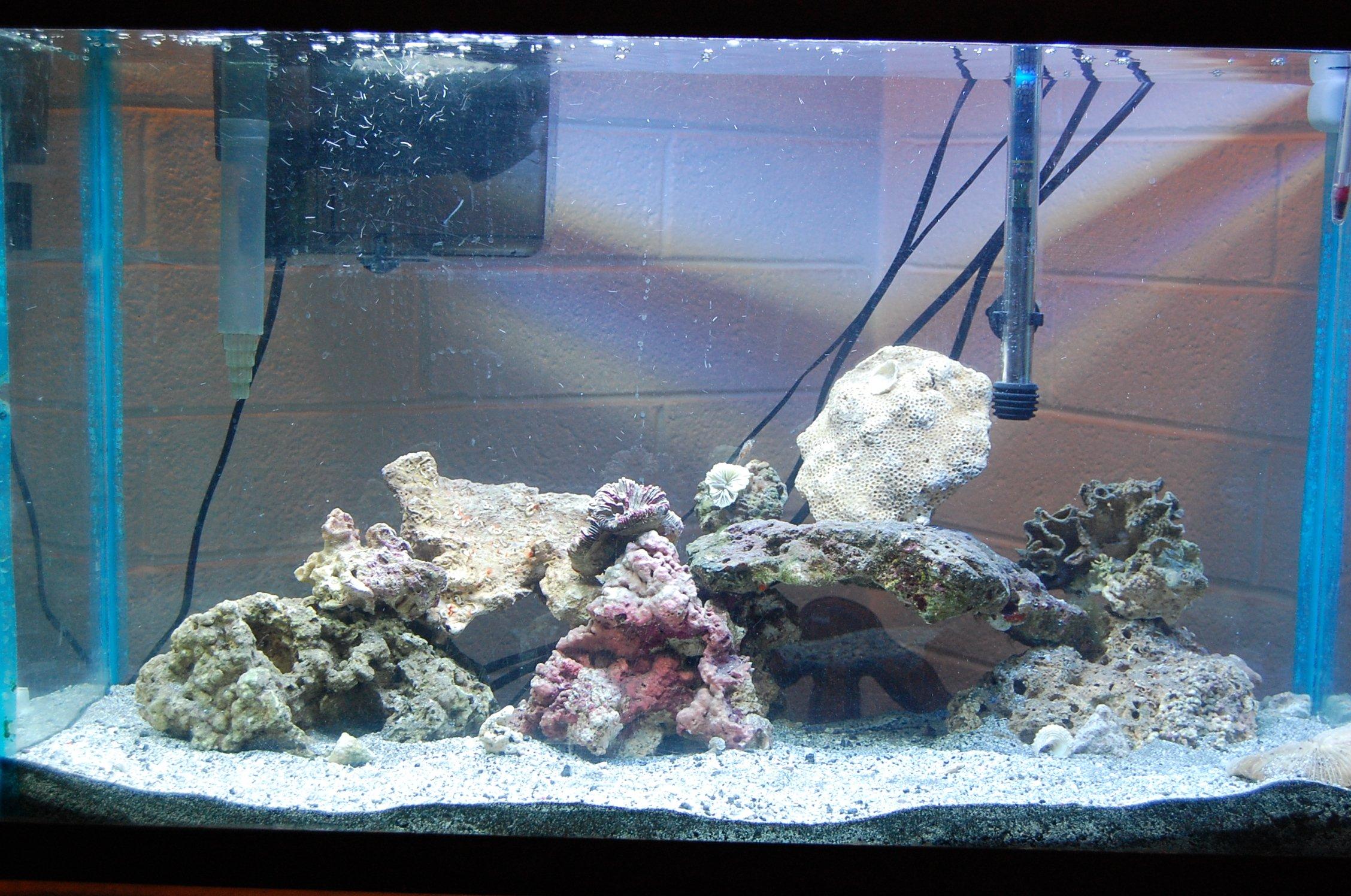 Starting a 29 gallon reef tank saltwaterfish forum for Starting a saltwater fish tank
