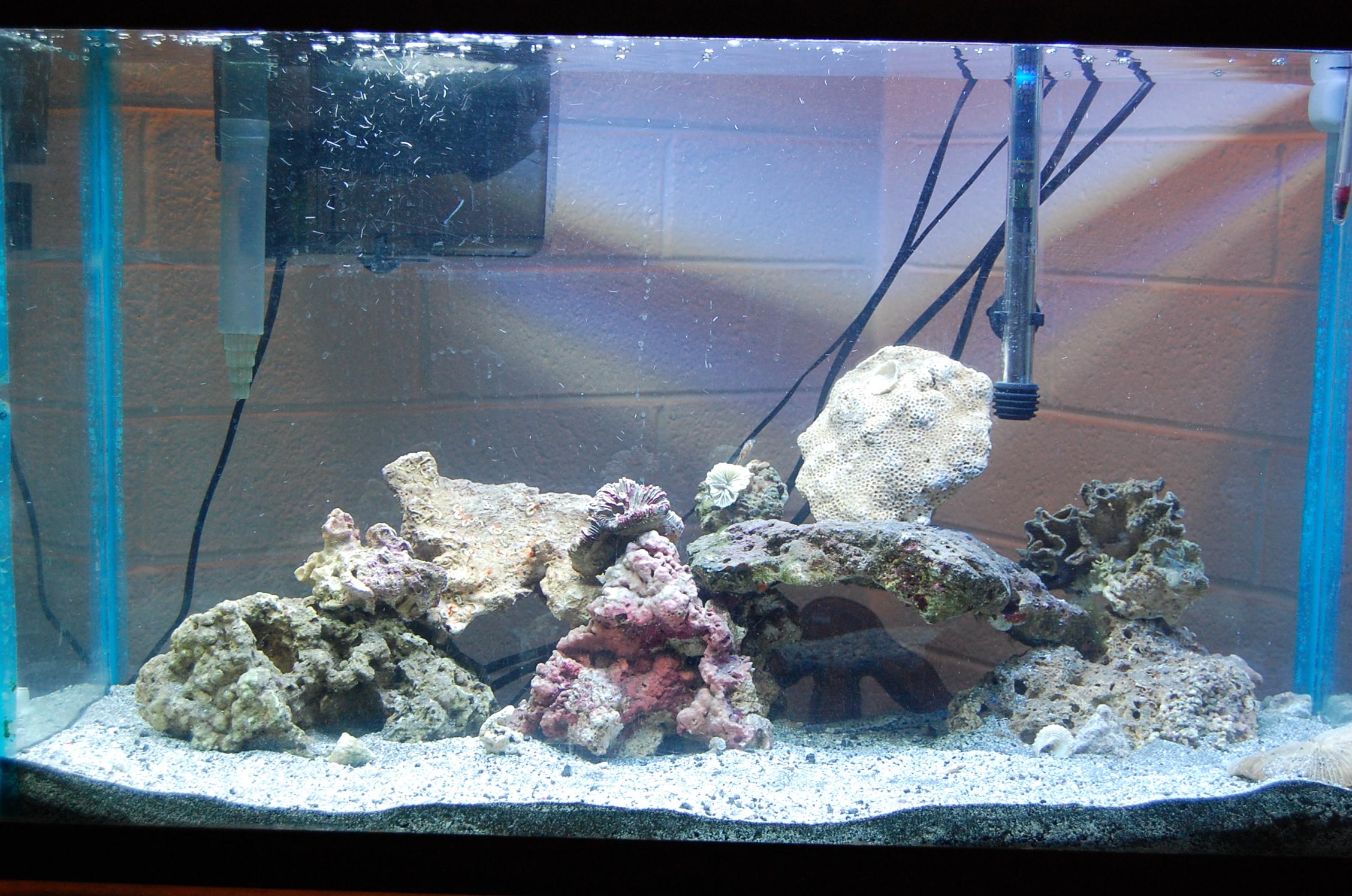 Starting A 29 Gallon Reef Tank Saltwaterfish Com Forums