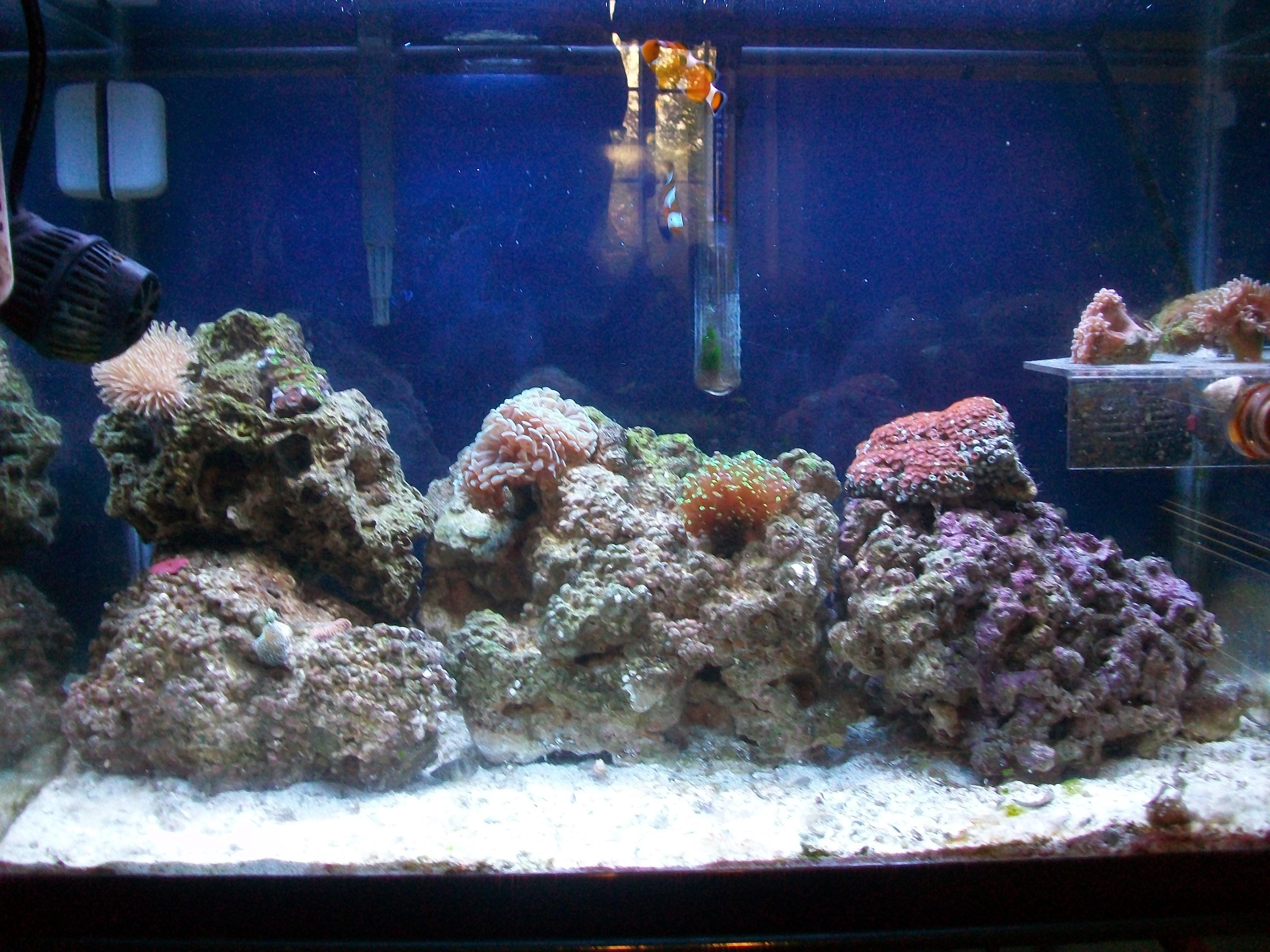 Tyler 39 s 20 gallon reef tank saltwaterfish forum for 4 gallon fish tank