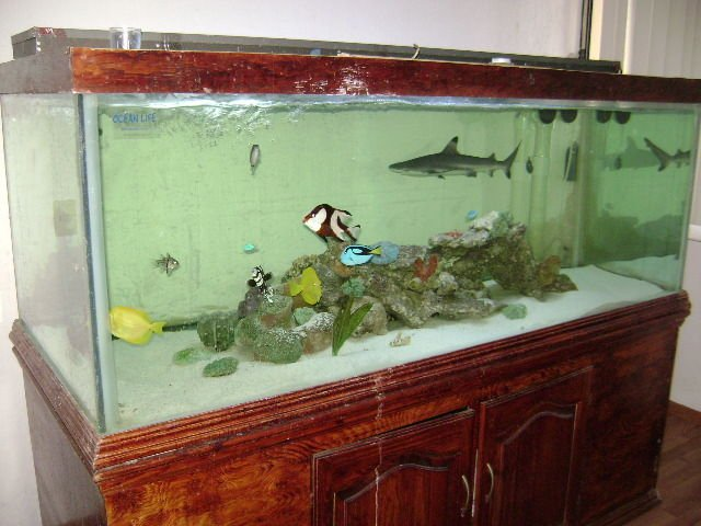 Most overcrowded tank i have ever seen saltwaterfish forum for Small sharks for fish tanks