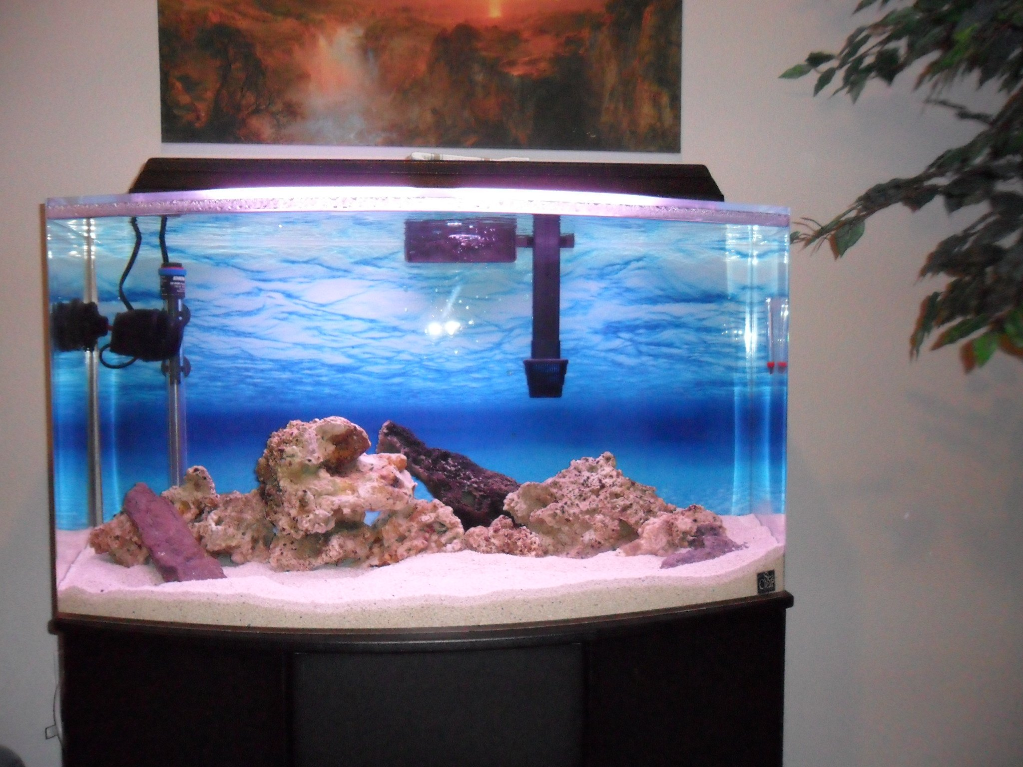 Saltwater tank 46 gallon 46 gallon reef tank fish for Bow front fish tank