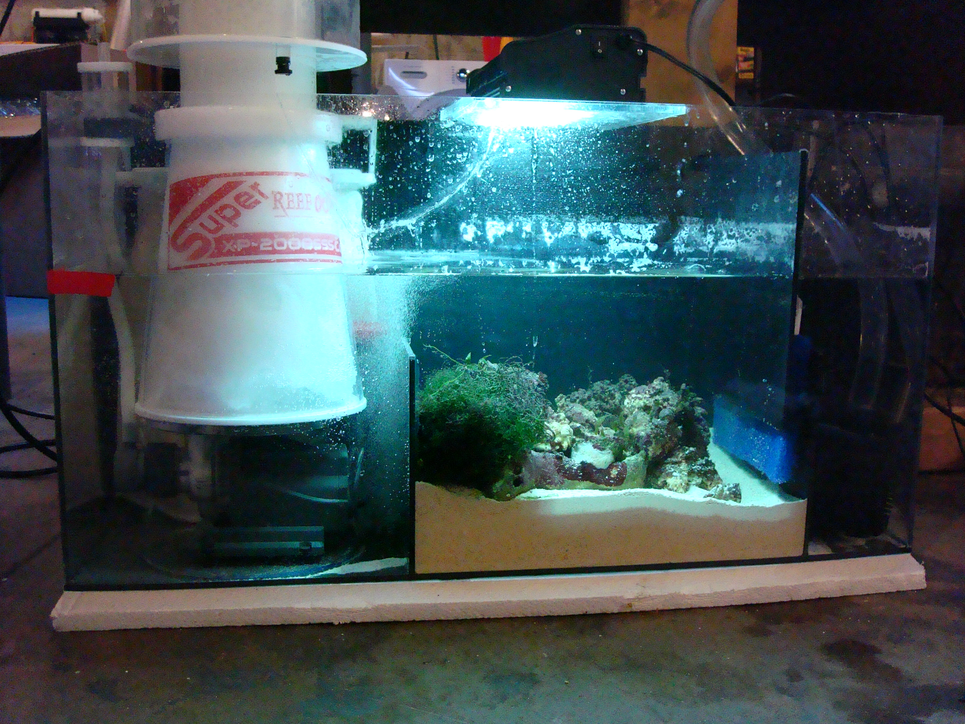 Problems Running 2 Refugium Sumps On 1 Tankplease Help