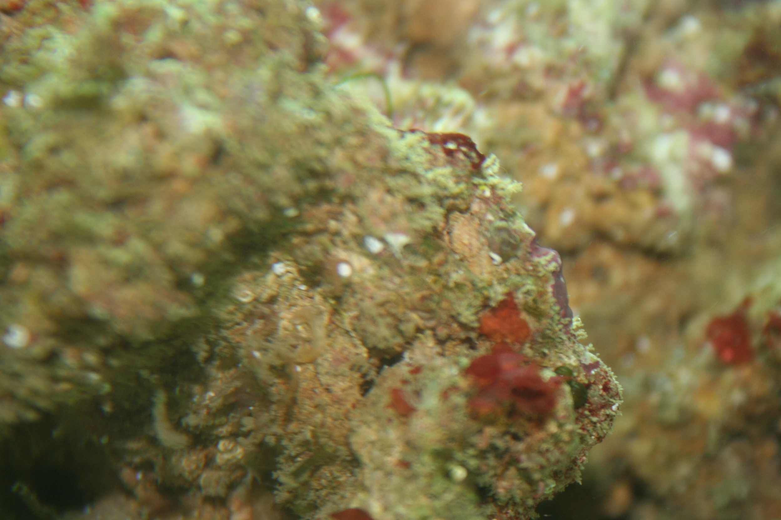 Fuzzy Live Rocks and Red Leaves | Saltwaterfish Forum