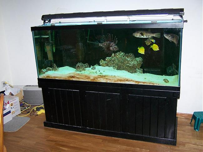 Nice predator tank panther grouper included for Predator fish tank