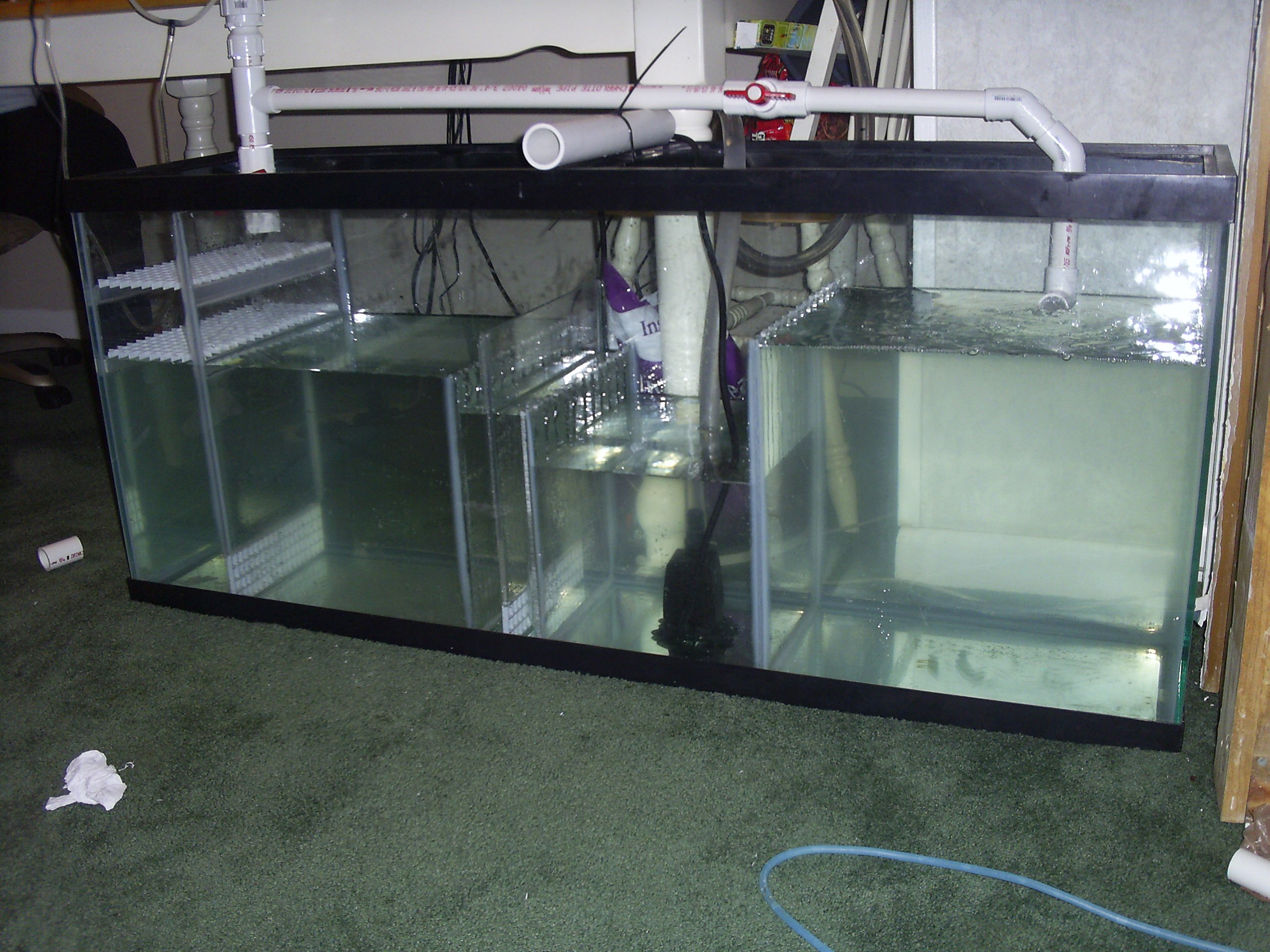 Saltwater fish tank pump setup layout of what the tank for How to make saltwater for fish