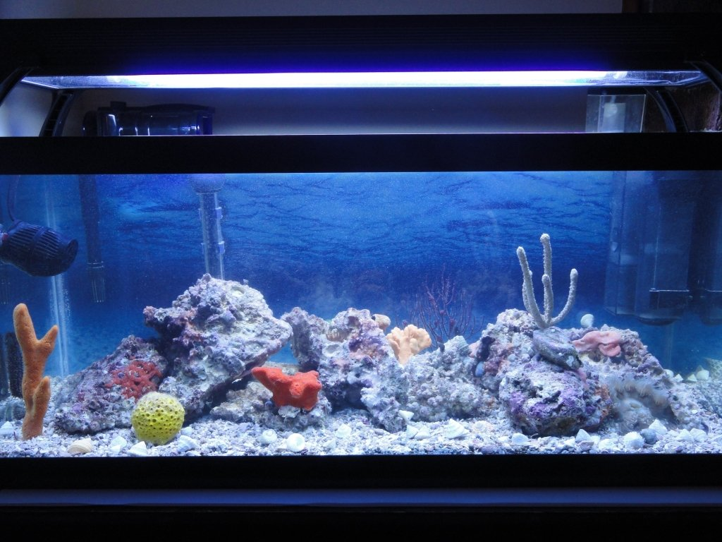 20 gallon long reef tank new page 2 saltwaterfish forum for How many fish in a 20 gallon tank