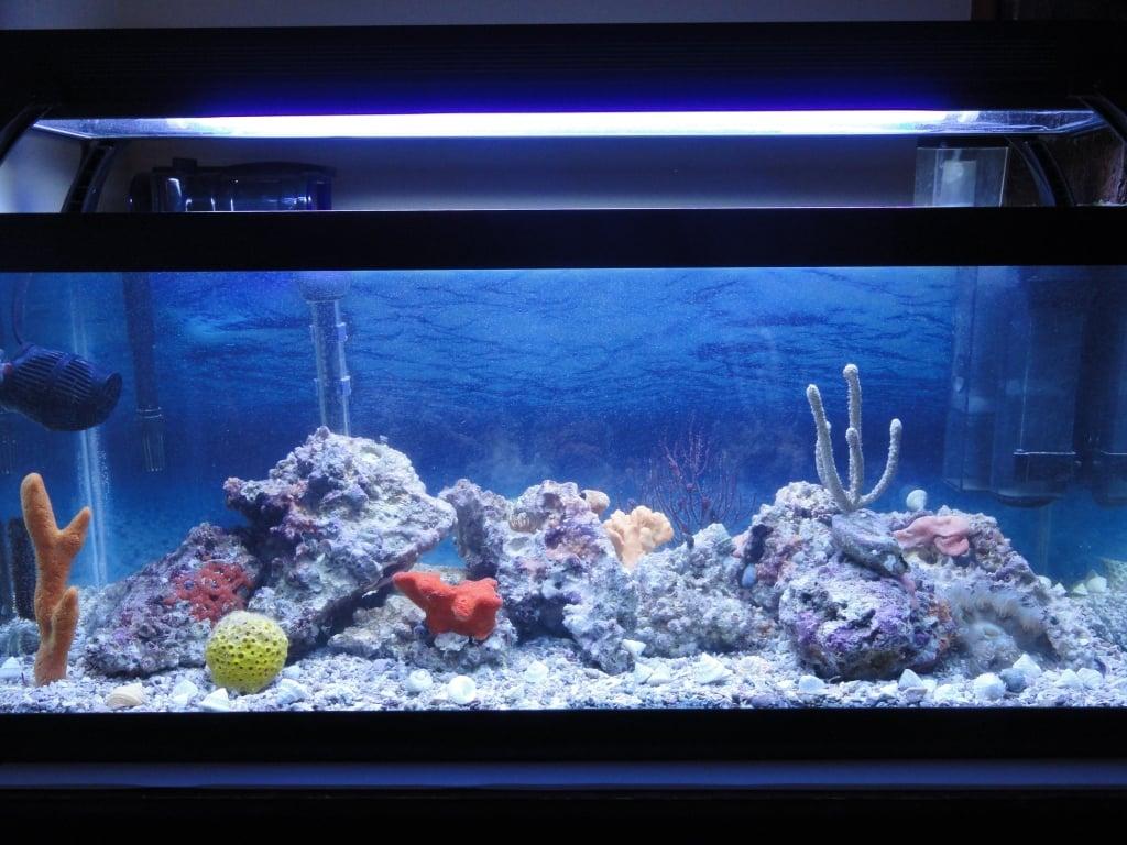 Saltwater fish tank 20 gallon tyler 39 s 20 gallon reef for 20 gallon long fish tank