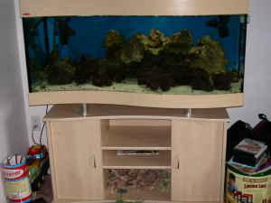 F/S 75 Gallon Ehiem Wave Front Aquarium w/ Stand u0026 Canopy - Sarasota Florida & F/S 75 Gallon Ehiem Wave Front Aquarium w/ Stand u0026 Canopy ...