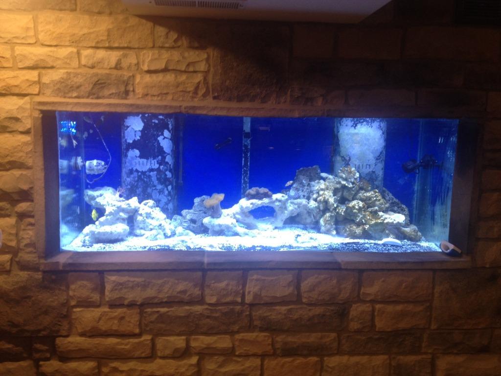 Man Cave Show Tank : Basement remodel and aquarium rebuild saltwaterfish forum