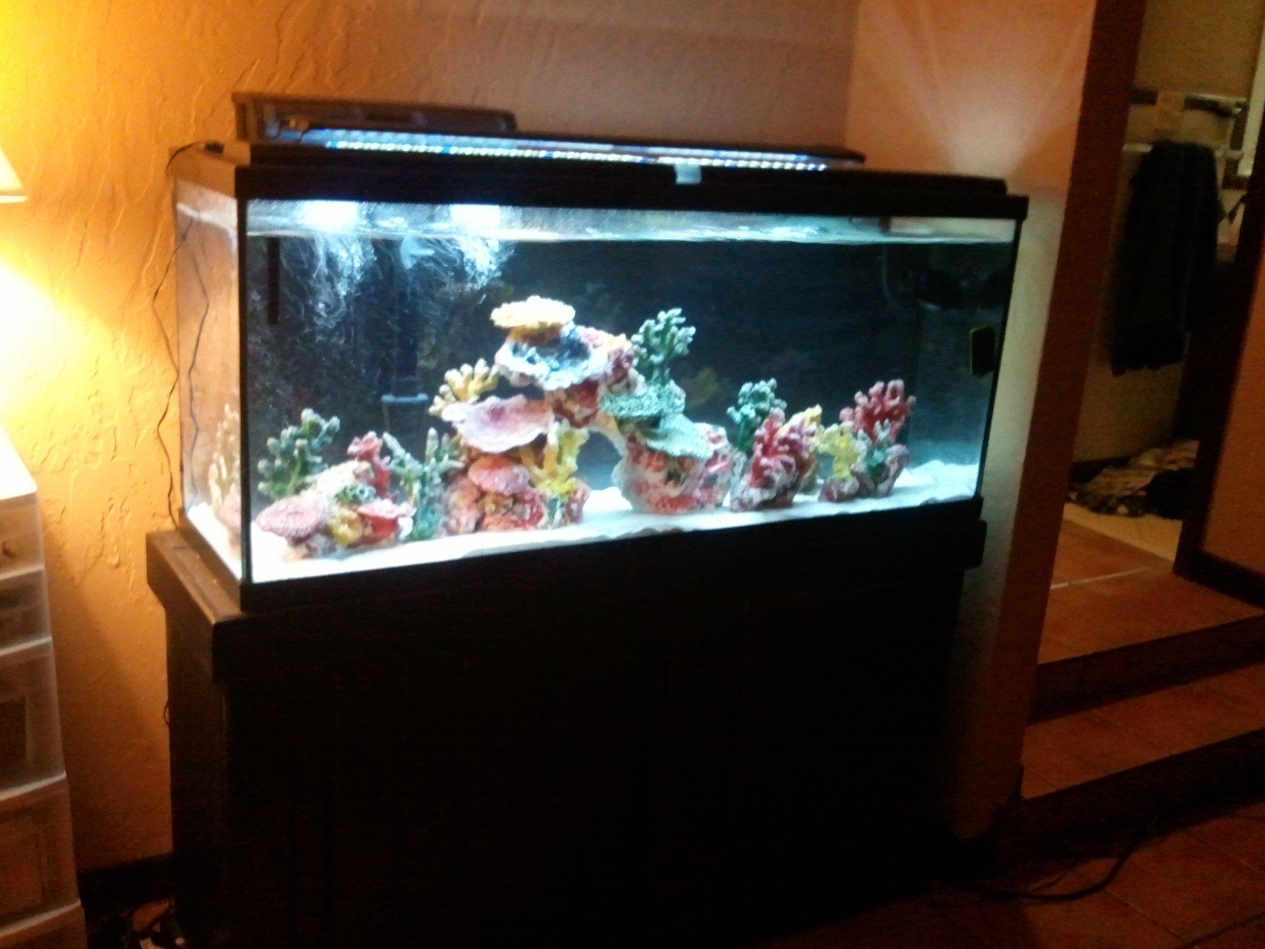 My fowlr 55 gallon tank diary first saltwater tank for 55 gal fish tank