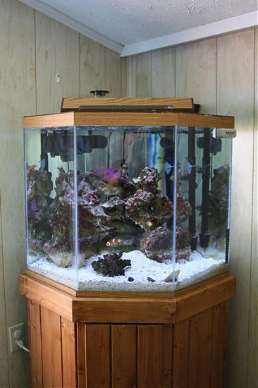 44 gallon pentagon soon to be reef tank saltwaterfish forum