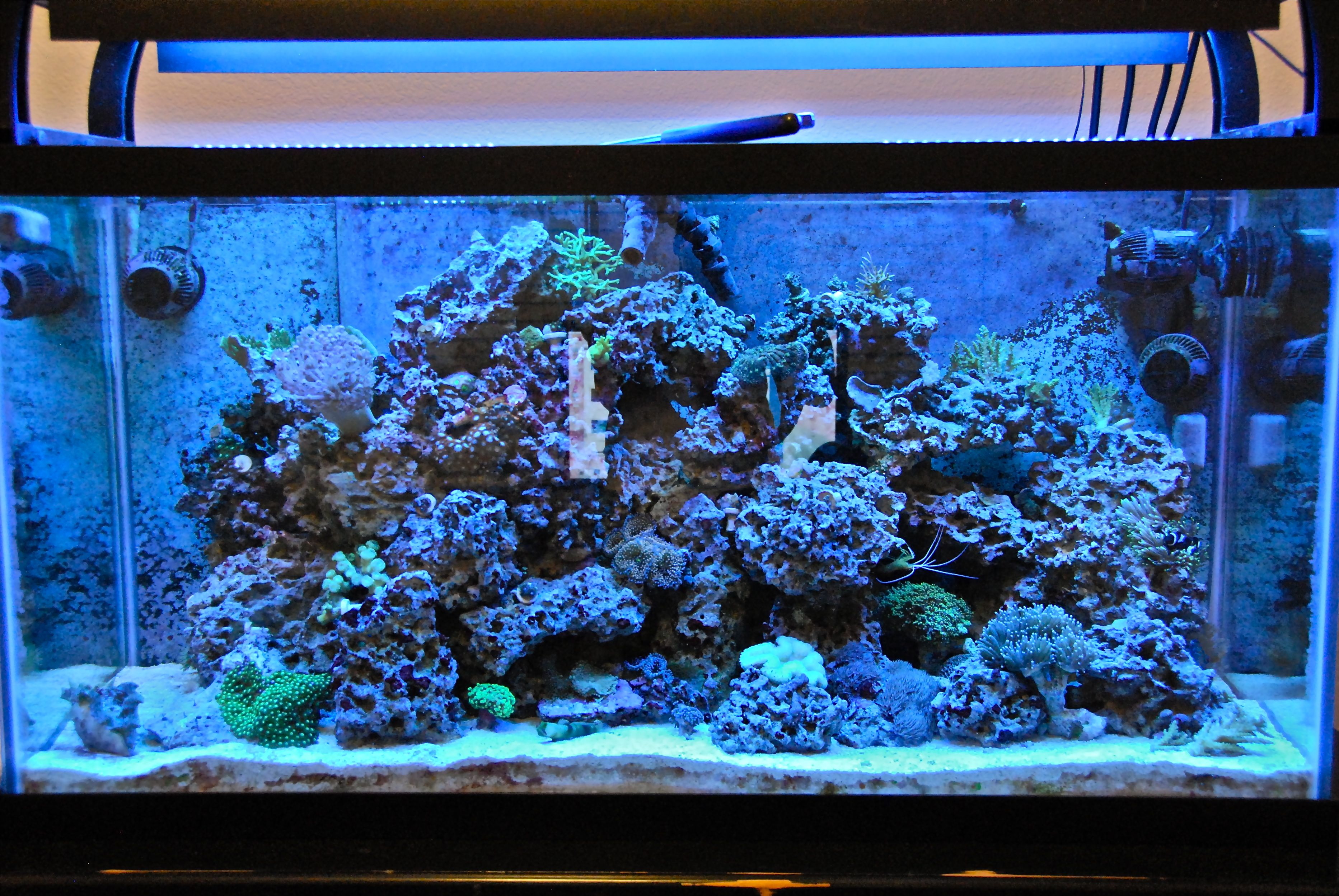 Wave maker or more pumps w pic saltwaterfish forum for Fish tank wave maker
