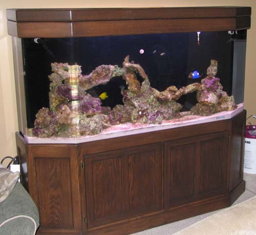 Central indiana 150 gallon clarity plus flat back for 150 gallon fish tank for sale craigslist