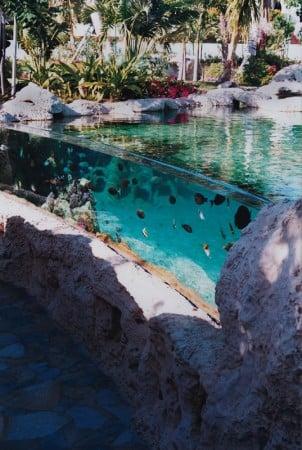 Backyard Lagoons | Saltwaterfish.com Forums for Fish Lovers!