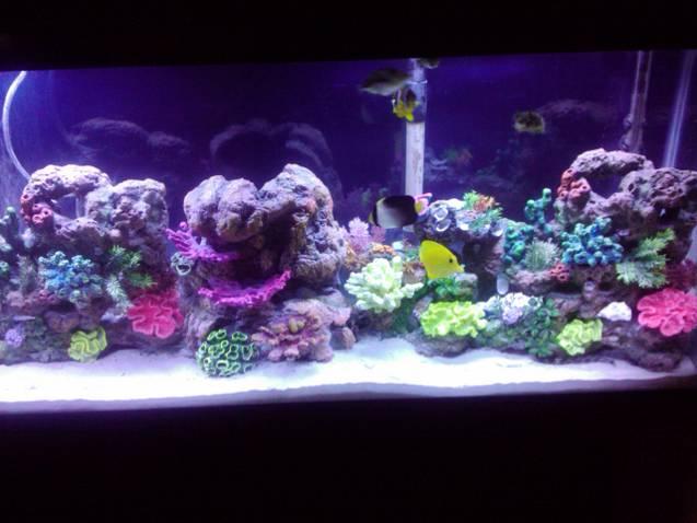 55 gallon saltwater tank saltwaterfish forum for 55 gal fish tank