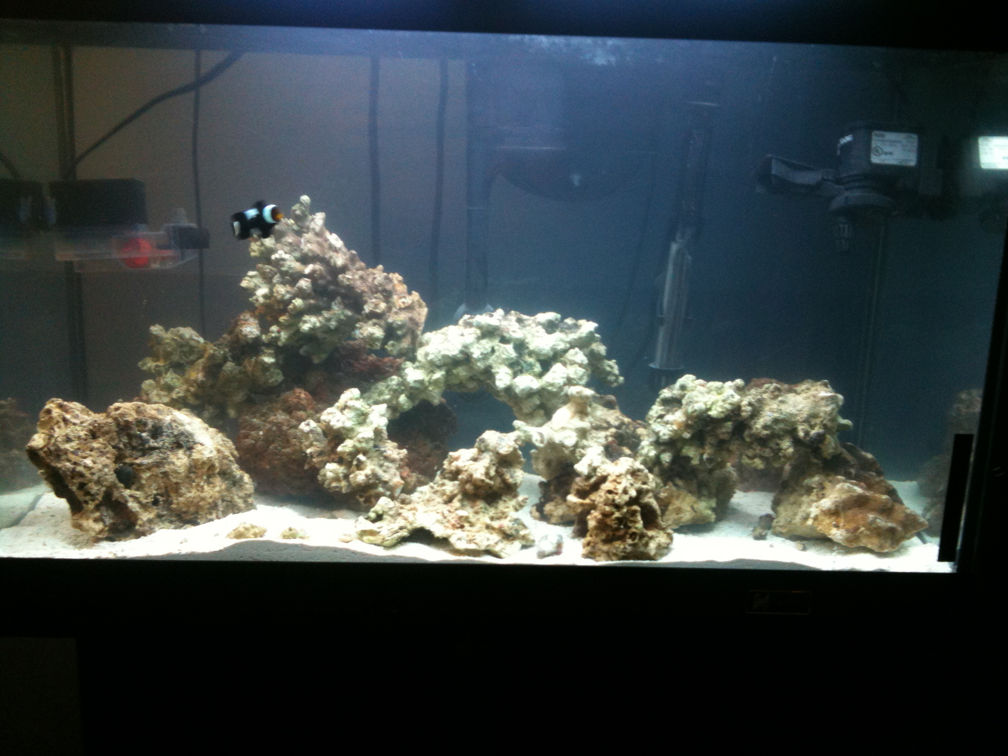 My 25 gallon reef tank build saltwaterfish forum for My fish tank