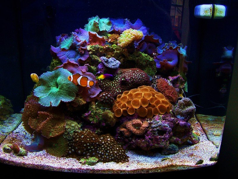 General care saltwaterfish forum for How much is a fish tank
