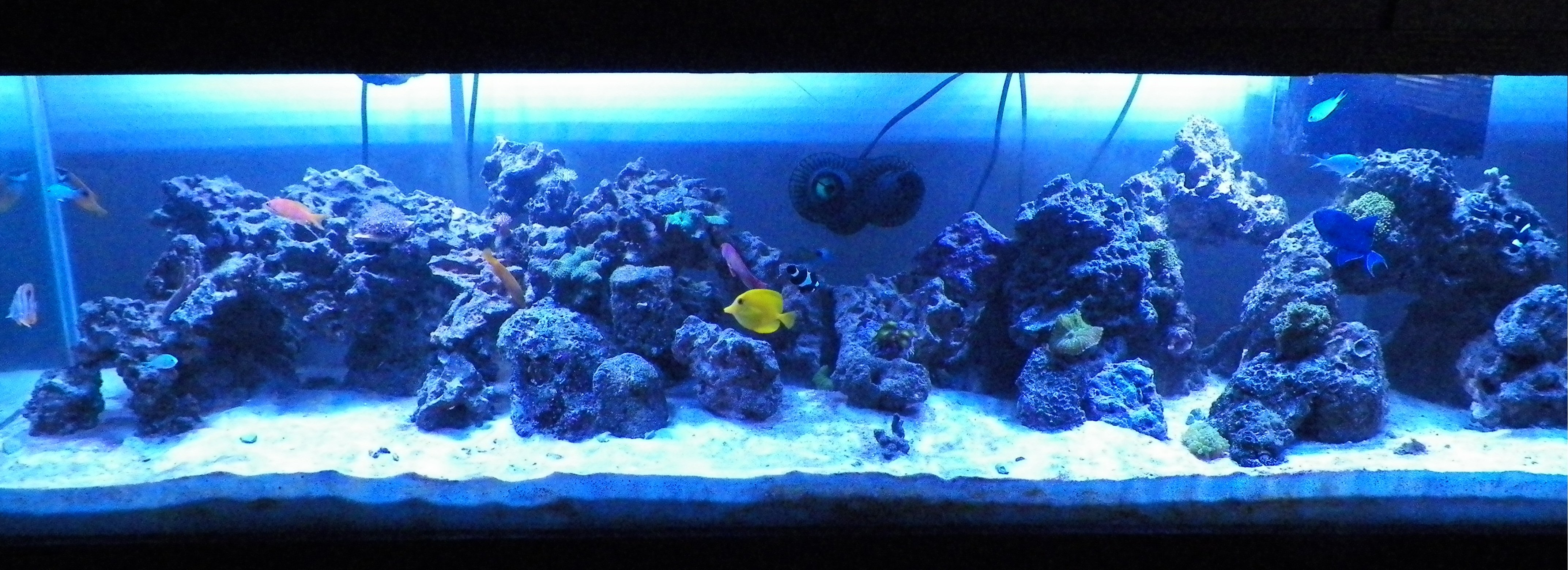 My 125 gallon reef tank saltwaterfish forum for 20 gallon saltwater fish tank