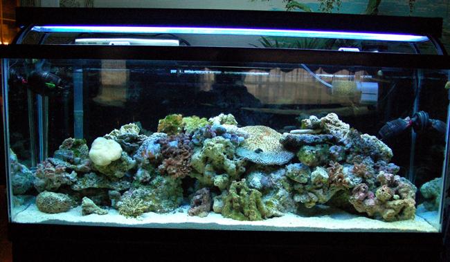 First saltwater tank 55 gallon diary saltwaterfish forum for 55 gallon fish tank setup