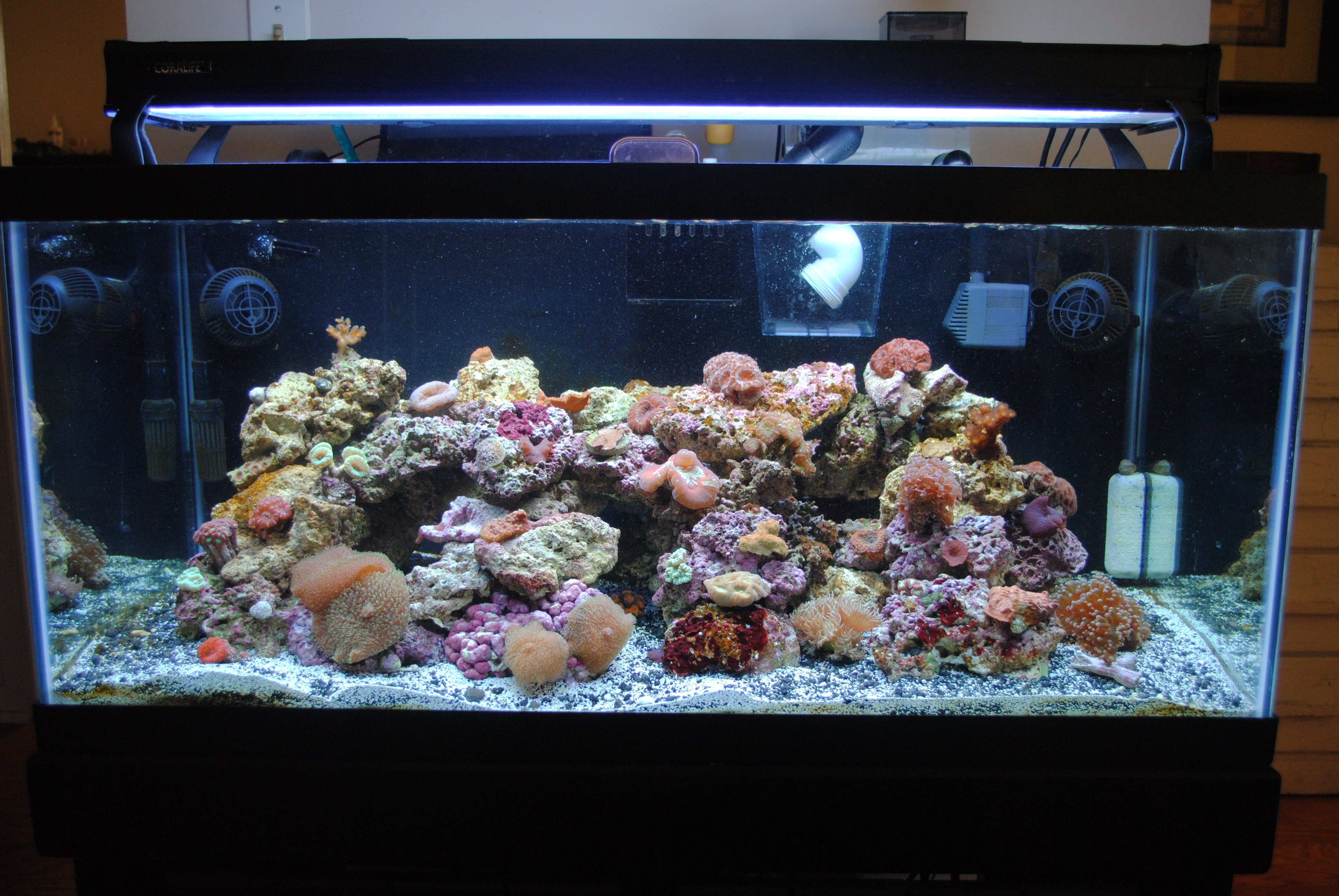 Saltwater fish 40 gallon tank 40 gallon saltwater fish for 40 gallon fish tank dimensions