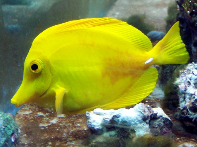 Tang has bacterial infection what to do saltwaterfish forum for Fish bacterial infection